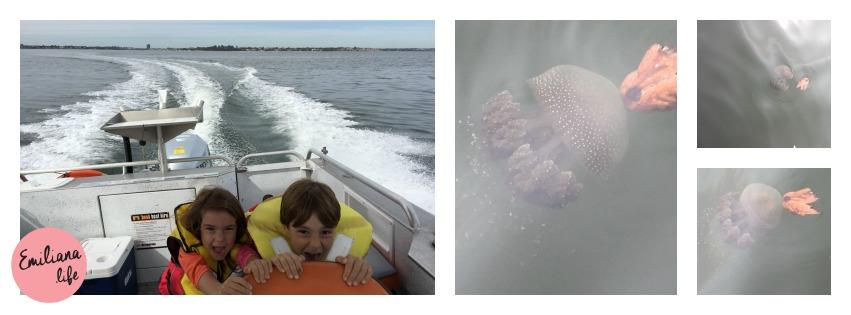 61 medusas swan river