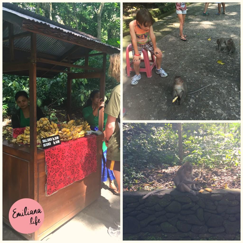 72 barraca vende bananas