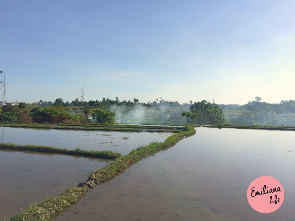 72 plantacao de arroz voltando ubud
