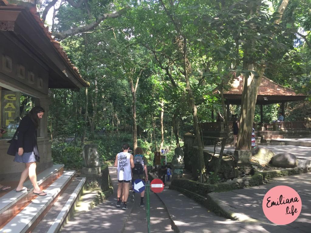 72 porta entrada floresta macacos