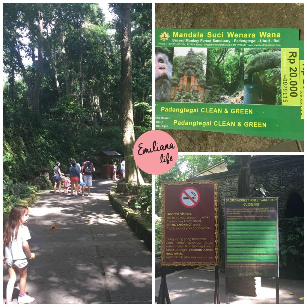 72 ticket floresta macacos