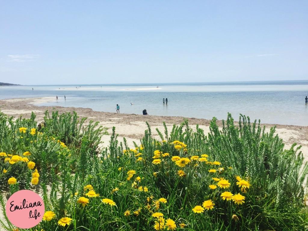 239 praia duns borough