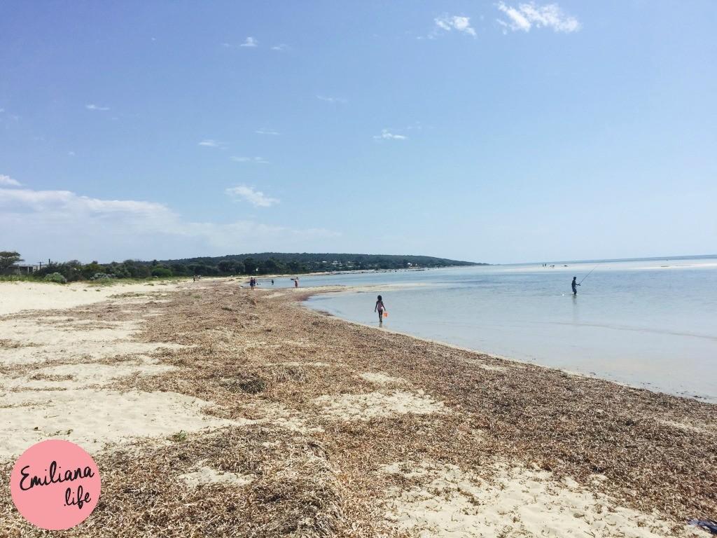 242 praia algas geograph bay duns borough
