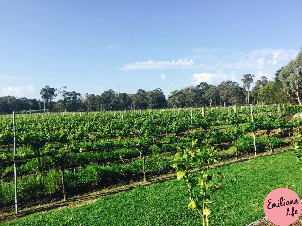 274 vinha providore margaret river