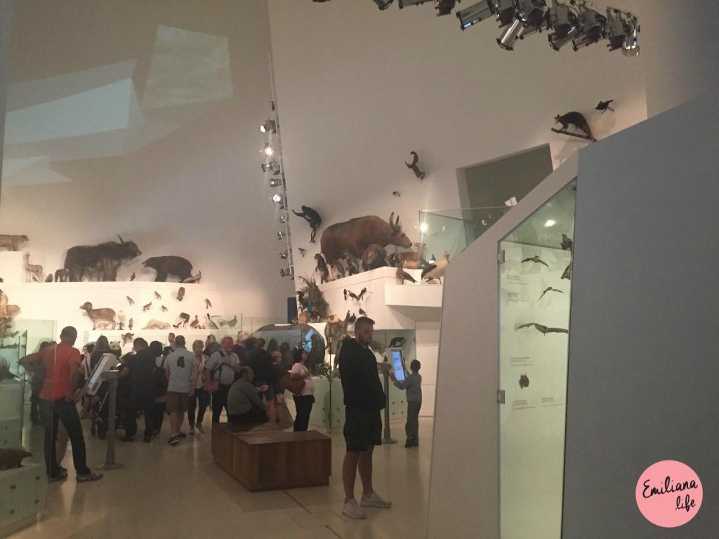 46 animais empalhados melbourne museum