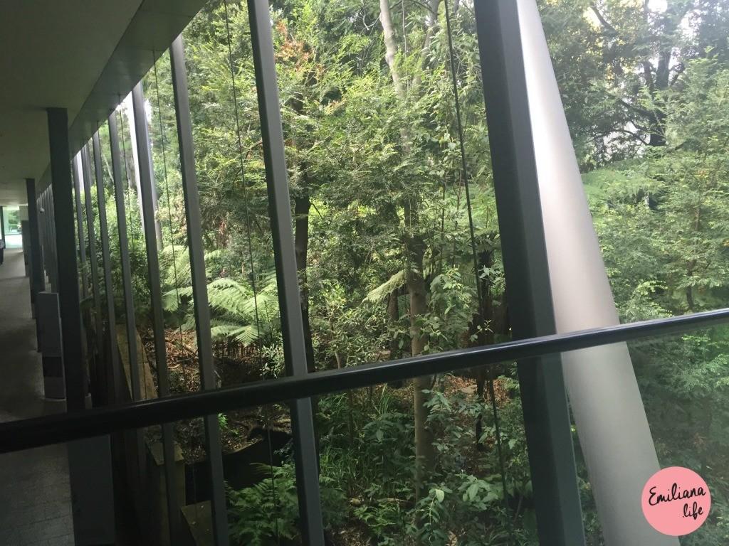 47 floresta melbourne museum