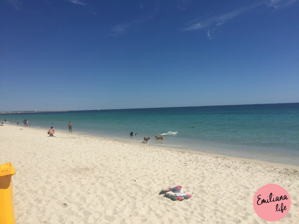 840 hillarys animal beach sand